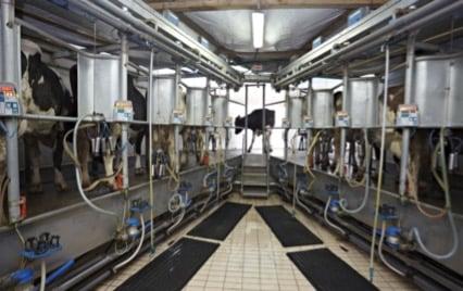 Milk & Dairy